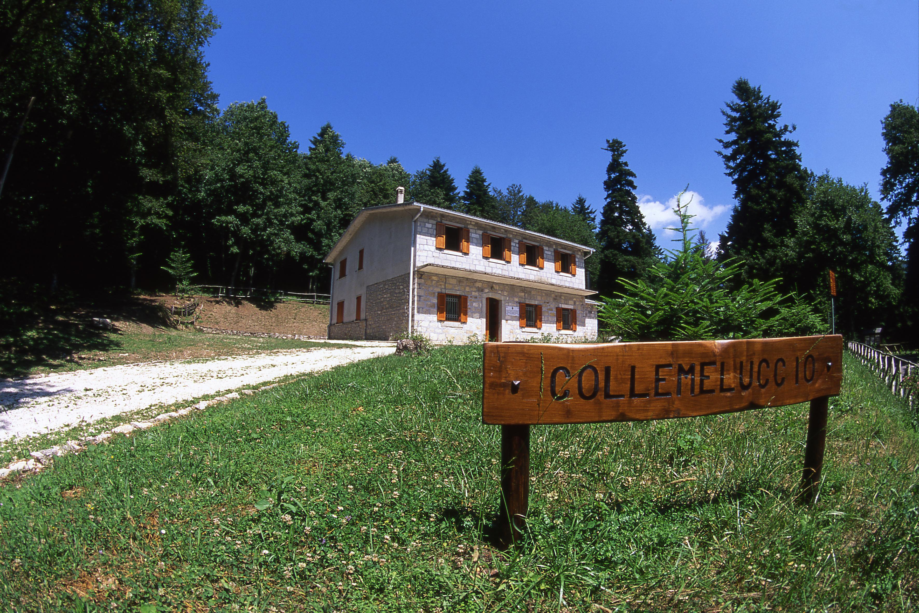 Bosco-di-Collemeluccio